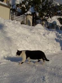 '06-山形雪道7