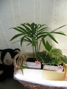 カワイイ植物達♪
