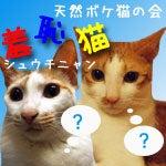 羞恥猫メンバー 陸&海