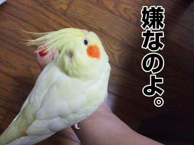 たんぽぽ033007