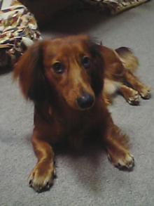 我の犬、その名はジャック