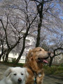 なんて楽しいお散歩タイムでしょうか!!!