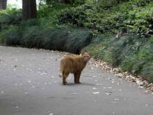北の丸公園の猫