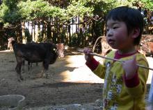 はやはや日記-hayahaya2009