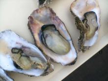 牡蠣のどて焼き