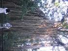 木のつるが、すごい。