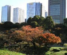 小石川庭園1