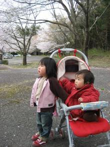 桜に興味津々