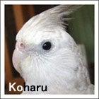 小春(2005年11/27・生まれ)