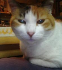 丸顔のソフィー