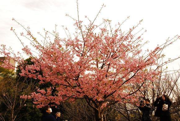 神泉で働くマジシャンのblog-sakura