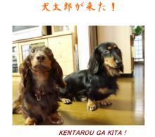 犬太郎が来た 2007