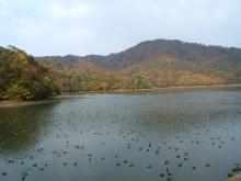 大山公園下池