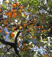 オレンジラヴリー☆