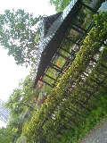 中島公園 日本庭園060528-1