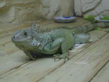 旅順・蛇博物館7