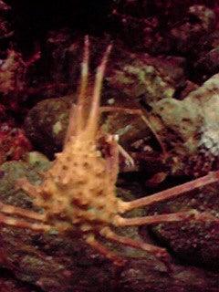 うたかた草々-蟹