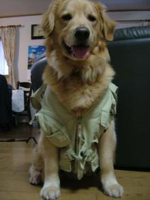 釣り師の犬ベスト