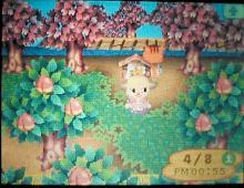 桜祭り09