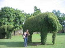 with the grass of elephant