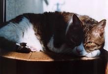 居候猫の「ネコ」-1