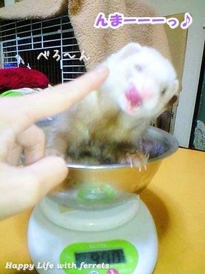 はっぴーらいふ with ferrets-体重チェック⑮