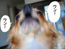 チョッパー(`Д´)!3