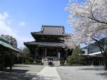 sakura_temple