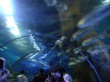聖亜海洋世界7