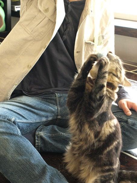 猫を操る男