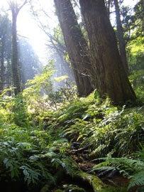 大山の森①