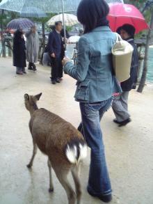 鹿とあっこちゃん