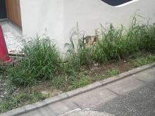 草刈り前-1