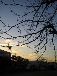 木と夕暮れ