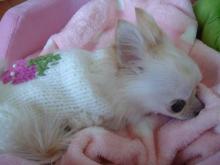 イチゴセーター3