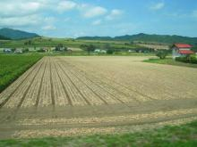 噂のタマネギ畑