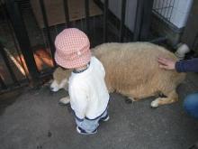 羊にもタッチ