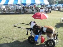 $ BIG DOG  coco&ふぅ&Annie