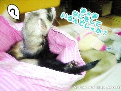 はっぴーらいふ with ferrets-体重チェック③