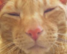cat-minimy