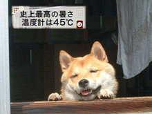 犬_居眠り