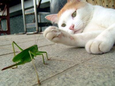 甲虫王者ムシキング画像