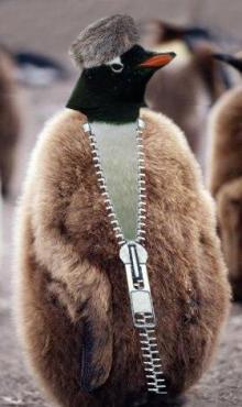 penguinsuit