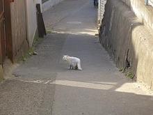 宮城県の猫さん-2