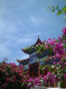 お花とお寺