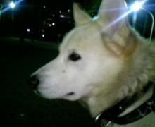夜の公園で@大河