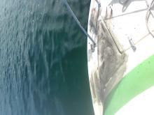 ☆大黒神島のメバル&へっぽこエギング&別府湾(馬場の背)のカワハギ☆