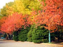 前庭の紅葉