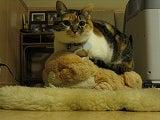 ネコに学ぶ21世紀を生き抜く法-cat on the cat 2