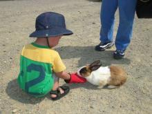 ウサギさんと結
